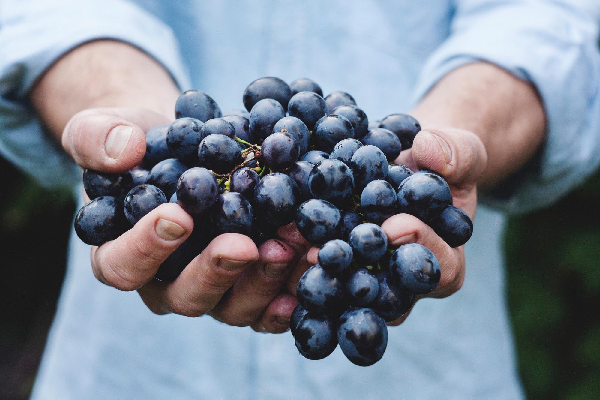 Weintrauben in der Hand
